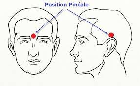 Pourquoi et comment détartrer votre glande pinéale