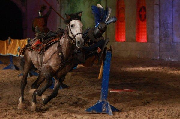 Florie Thibert Spectacle equestre | Wix.com