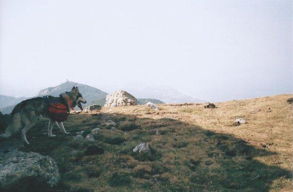 Traversée des Pyrénées en Canirando juillet 2015: Banuyls-Pic du Canigou