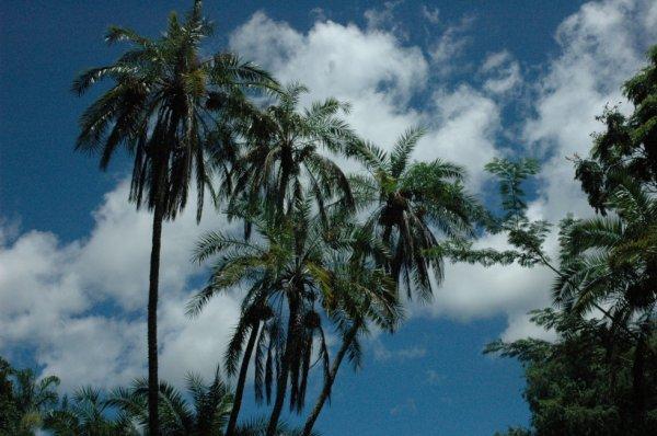 L'île Maurice, le Paradis sur Terre ♥
