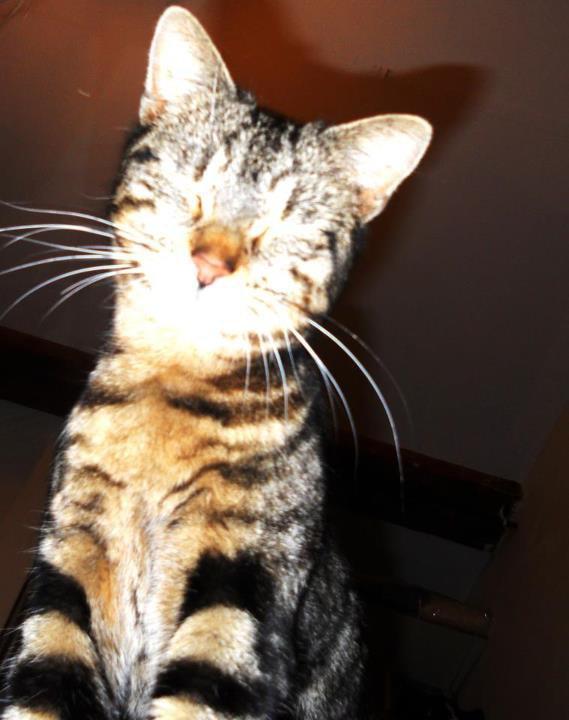 """""""Dieu a inventé le chat pour que l'homme ait un tigre à carsser chez lui."""" Victor Hugo"""