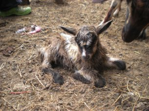 deux naissances chez praline