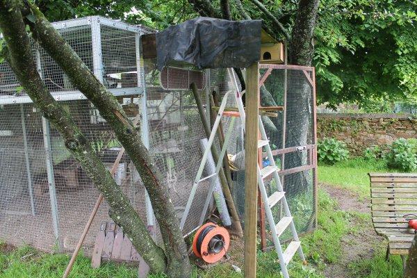 L'agrandissement de la volière pour les petits oiseaux