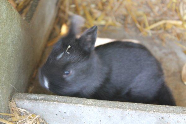 les lapineaux sont supers beaux, vous trouvez po ????