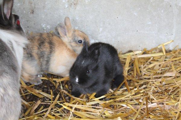 Ce sont des lapines,