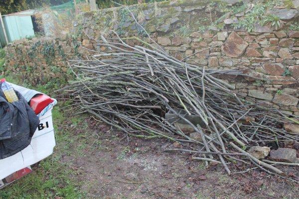 le 16 janv 2016 le bois des tilleuls
