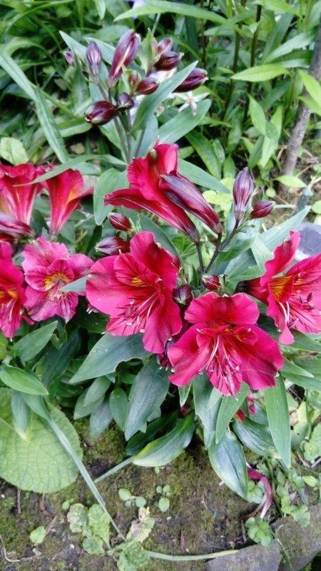 Trop belles mes fleurs cette année