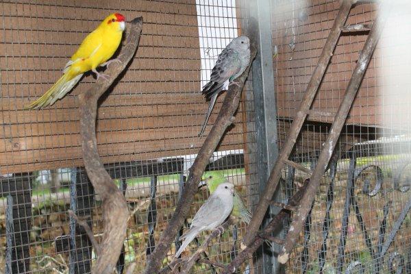 de nouveaux oiseaux dans les volières