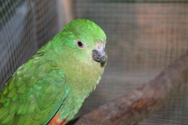 des nouveautés chez les oiseaux