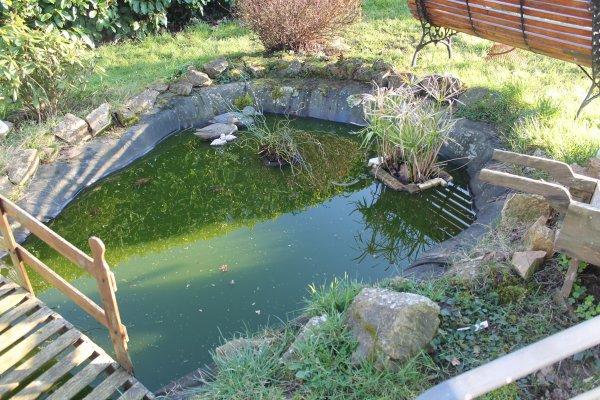 une grenouille au bassin