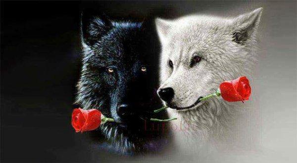 """Résultat de recherche d'images pour """"loup et rose"""""""