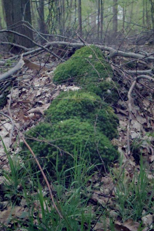 Garennes Forest