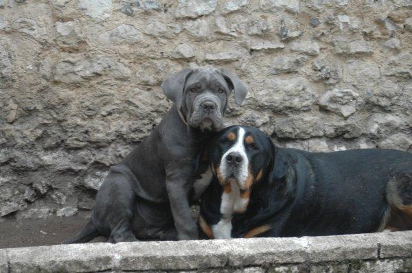Gandalf et Cluny ... instants tendresses