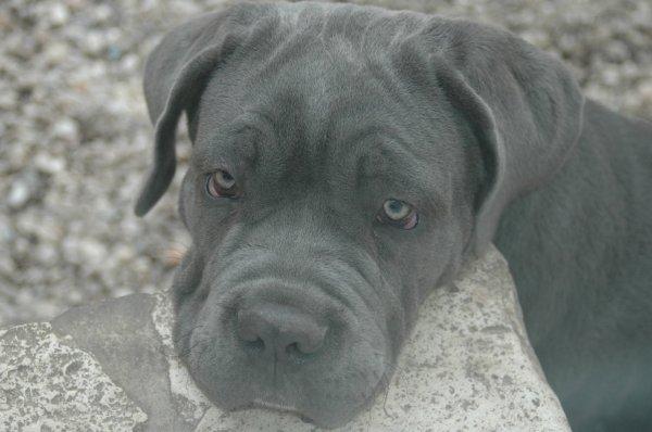Gandalf - 4 mois - 31,500 kilos