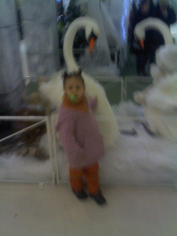 shaines deco noel dock 21/12/2011