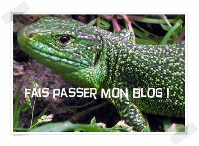 Bienvenu sur un blog de protection des animaux ♥