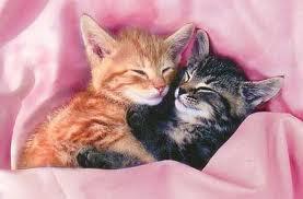 mignons chats qui dorts