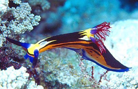 Biologie animale, Zoologie: diversité, classification, ecologie, phylogénie des animaux.