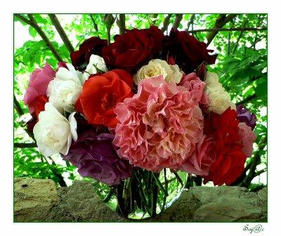 fleur de printemps fleur d 39 ete tout ce que j 39 aime chanteur etc la poesie. Black Bedroom Furniture Sets. Home Design Ideas