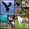 Animaux-World