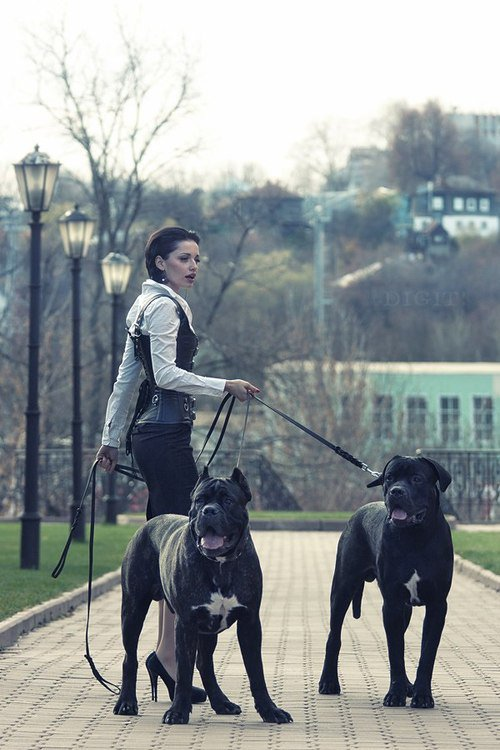 Qu'est ce que j'adore ces chiens *-*
