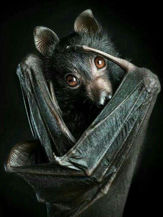 L'animal le plus beau au monde