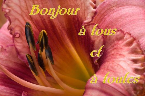 Bonjour, les fleurs de mai : aujourd'hui les hémérocalles, les centaurées, les jacinthes des bois et les valérianes