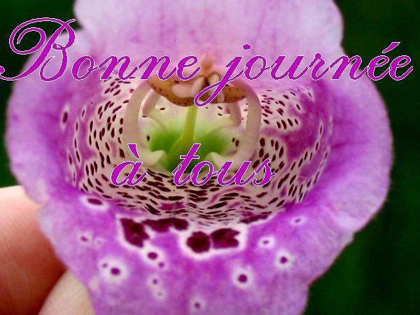 Bonne journée à tous et à toutes.