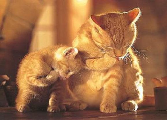 La tendresse chez nos compagnons les chats.