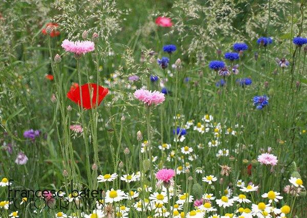 Aujourd'hui, c'est la journée mondiale de l'environnement - il est plus que temps, la nature est si belle !