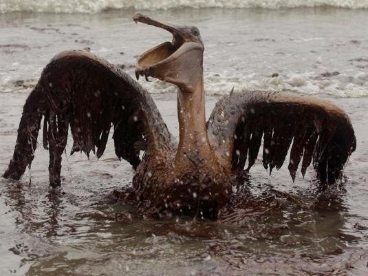Aujourd'hui, c'est la journée mondiale de l'environnement  -  les marées noires