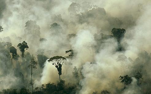 Aujourd'hui, c'est la journée mondiale de l'environnement  -  les sols, les rivières, l'Amazonie
