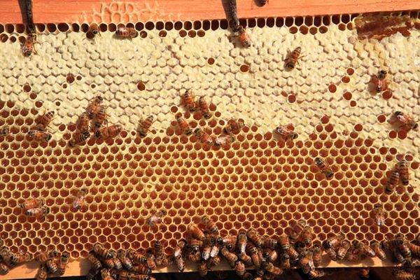 Aujourd'hui, c'est la journée mondiale de l'environnement  -  les abeilles