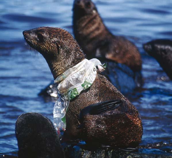 Aujourd'hui c'est la journée mondiale des océans.