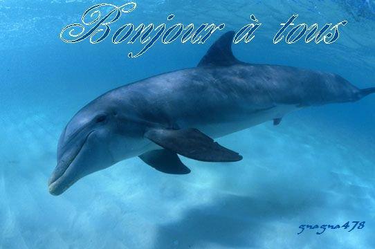 Bonjour à tous et à toutes, aujourd'hui c'est la journée mondiale des océans.