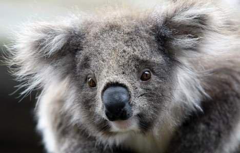 Il s'en passe en Australie, voici quelques faits trouvés sur 7sur7.be