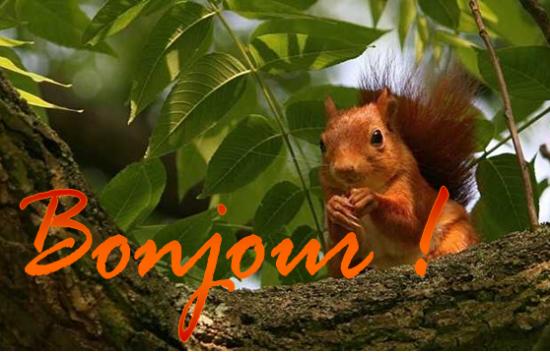 Bonjour à tous et à toutes aujourd'hui, en ce début d'automne, faisons la part belle à cette superbe saison et à sa faune, aujourd'hui, ce sera l'écureuil