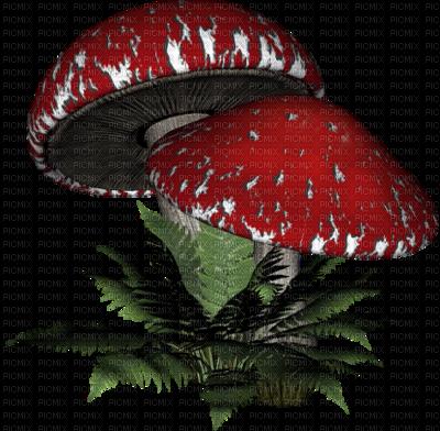Aujourd'hui, voici quelques citations pour agrémenter les gifs et les photos de champignons nombreux cet automne.