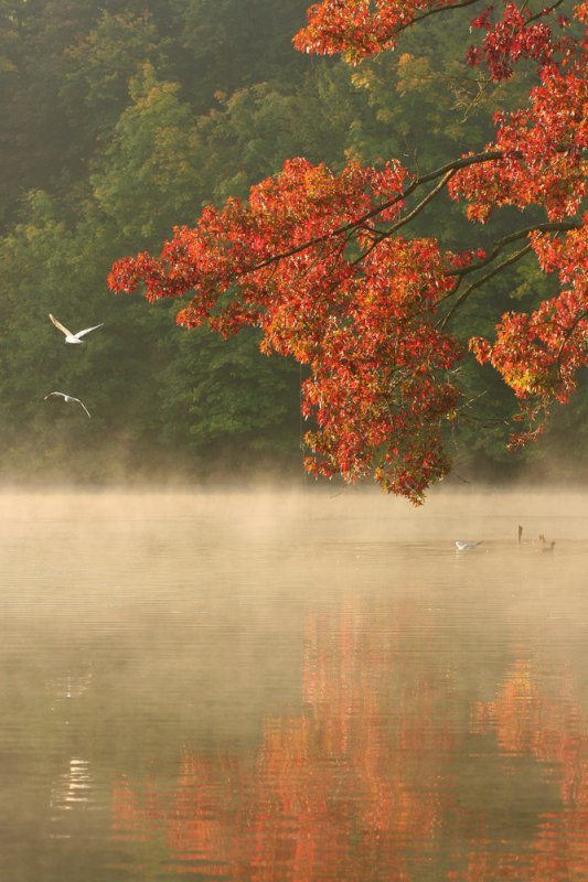 Quoi de plus beau que ces reflets multicolores de notre belle nature d'automne.