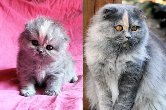 Aujourd'hui, et pour débuter le dernier jour de la semaine, voici quelques merveilleux chatons et chats, de quoi entamer la journée avec douceur.