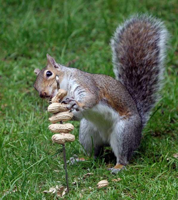 Bonjour à tous et à toutes, aujourd'hui, je vous propose un petit intermède avec les écureuils. Je vous souhaite une très bonne journée ce mardi.