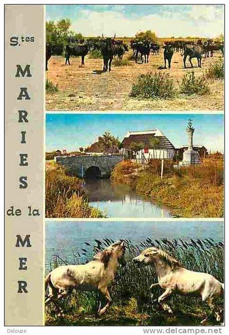 Carte postale plus ou moins ancienne de la Camargue et de ses chevaux