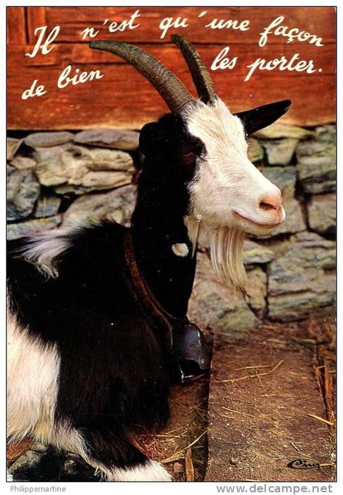 Carte postale ancienne humoristique