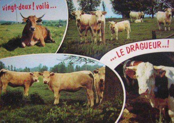 Ancienne carte postale humoristique