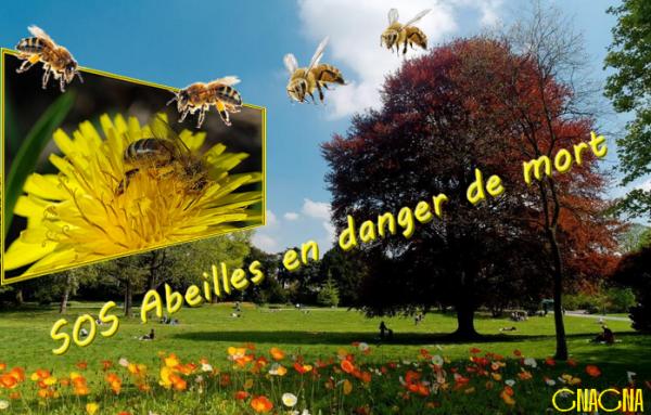 SOS abeilles en danger