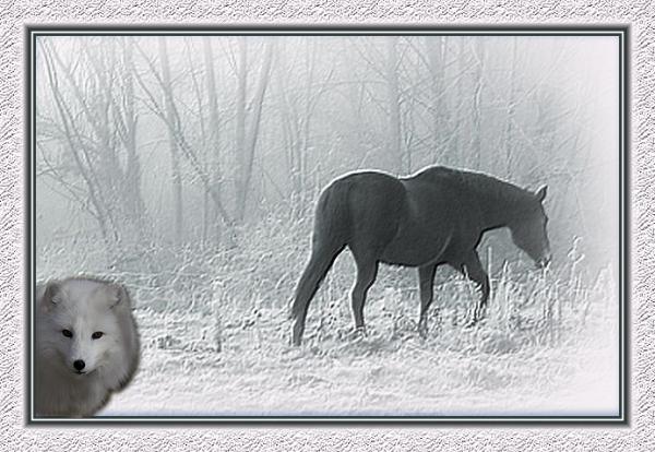 Le cheval et le loup
