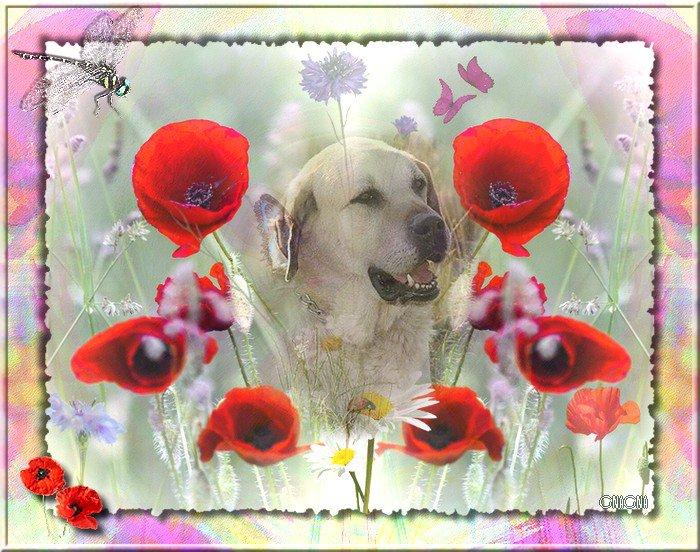 Beau chien parmi les fleurs champêtres