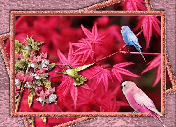 Le cadre aux oiseaux