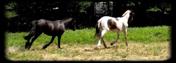 """Voila Xylophone Ensuite on va me dire """"Quelle drôle de nom"""" Mais on ne juge pas un cheval sur son prénom ou sur son apparence il faut découvrir ce qu'il y a au fond de lui et ensuite sa devient magique ... ♥"""