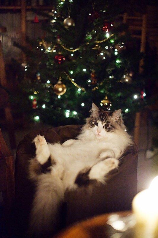 pour noël, mon chat vous offre son regard